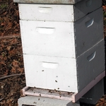 Here's are the nucs that hold the bees.