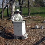 Mel Bratz dons beekeeper's garb to check the hives.